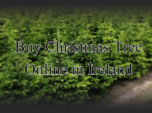 buy christmas tree online ireland